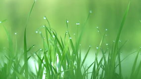 Drops of dew on the grass stock video footage