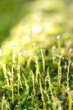 Drops of dew on a grass Royalty Free Stock Images