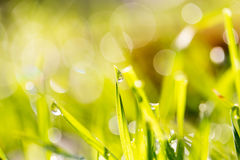 Drops of dew on the grass. A photo Royalty Free Stock Photos