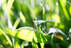 Drops of dew on the green grass Royalty Free Stock Images