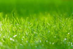 Drops of dew on a green grass Stock Image
