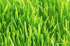 Drops of dew on a green grass Stock Images