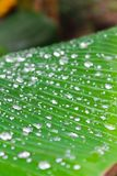 Drops of dew on green leaf royalty free stock photos