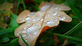 Drops of dew on leaves. Spring nature Royalty Free Stock Image