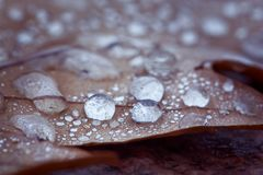 Drops of dew macro on an autumn leaf. The background of rain, au royalty free stock image