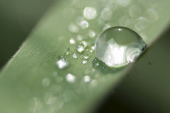 Drops Dew Stock Image