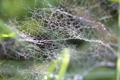Drops of dew on spider web in the grass Royalty Free Stock Images