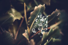Drops of dew. On a spider web in the grass Stock Images