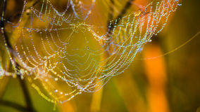 Drops of dew on web shined by morning light Royalty Free Stock Photo