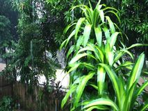 Drops falling on the leaves of plants. Tropical rain. Drops falling on the leaves of plants stock video