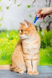 Drops from fleas and ticks for cats. Cat give drops of fleas and ticks for dogs on the background of nature stock image