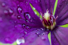 Drops on a flower Stock Image