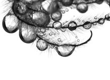 Drops on flower seeds. Wet flower seeds on white royalty free stock photography