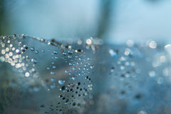 Drops on a glass with selective focus. Royalty Free Stock Photo