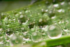 Drops on the grass. Microfilming water droplets on the grass Royalty Free Stock Photos