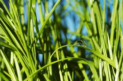 Drops in grass Stock Images