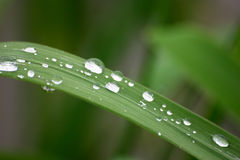 Drops and grass. Drops on the grass Stock Photography