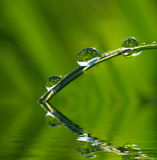 Drops on grass Royalty Free Stock Image