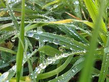 Drops in grass Royalty Free Stock Images