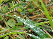 Drops in grass Royalty Free Stock Photography