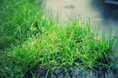 Drops on grass near water. Green grass with drops of water on it near lake royalty free stock photos
