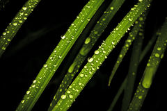 Drops on the grass after rain Royalty Free Stock Images