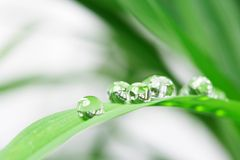 Drops with green grass Royalty Free Stock Photo