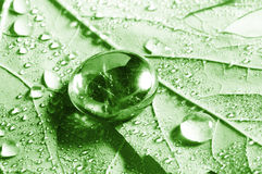Drops with green grass Stock Photography