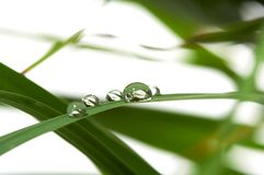 Drops with green grass Royalty Free Stock Image