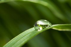 Drops with green grass Stock Image