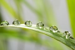 Drops with green grass Royalty Free Stock Photography