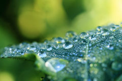 Drops on green leaf Royalty Free Stock Photo