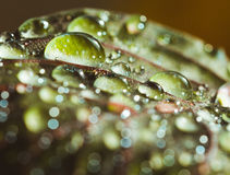 Drops Stock Photography