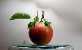 Drops on juicy apple with leaves on the stalk studio  Royalty Free Stock Photo