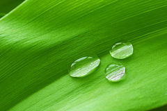 Drops on the leaf Stock Photos
