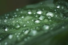 Drops on a leaf. Close up of water drops on a leaf Royalty Free Stock Photography