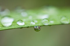 Drops on the leaf Stock Image