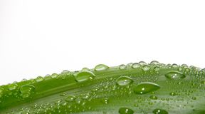 drops leaf Στοκ φωτογραφία με δικαίωμα ελεύθερης χρήσης