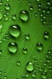 Drops on leaf Royalty Free Stock Image