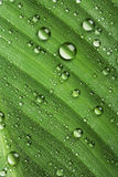 Drops on leaf Royalty Free Stock Photo