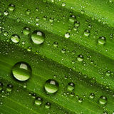 Drops on leaf royalty free stock images