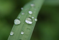 Drops on leaf. Rain drops on green leaf stock photos