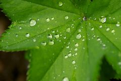Drops on a leaf Royalty Free Stock Photography