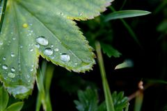 Drops and leaf Royalty Free Stock Photography