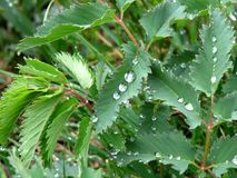 Drops and leaf Royalty Free Stock Photos