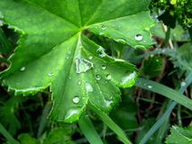 Drops and leaf Royalty Free Stock Images
