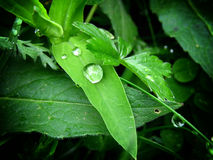 Drops and leaf Stock Images