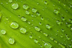 Drops on a Leaf Stock Images