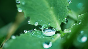 Drops on a leaf. In morning dew in the spring Royalty Free Stock Photo
