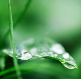 Drops on a leaf 10. Drops on a leaf in morning dew in the spring Royalty Free Stock Photography